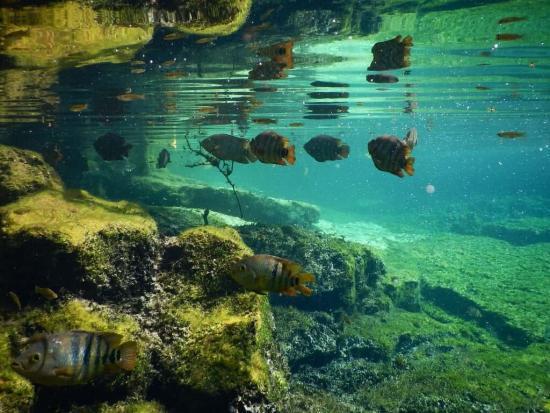 Cenote-Azul-Cenotes-in-the-Riviera-Maya