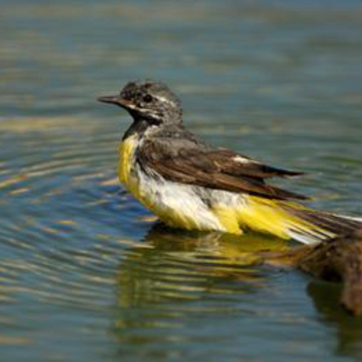 Aves se refugian de la sequía en la Reserva Ambiental