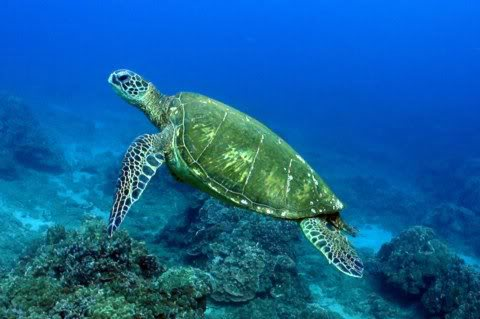 Annual Sea Turtle Festival
