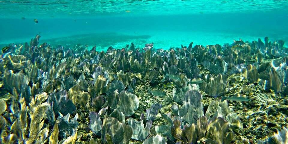Cabo San Lucas reef