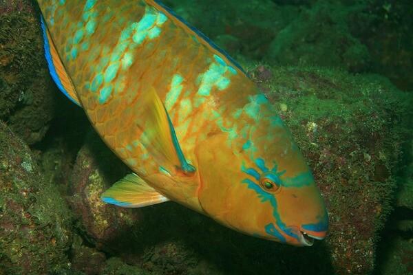 peces del Caribe