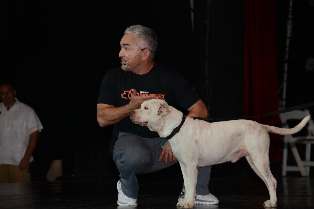 Cesar Millan dog training