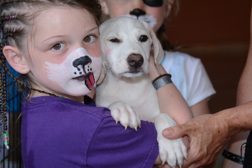 Dog face paint