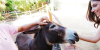 Donkeys in Playa del Carmen
