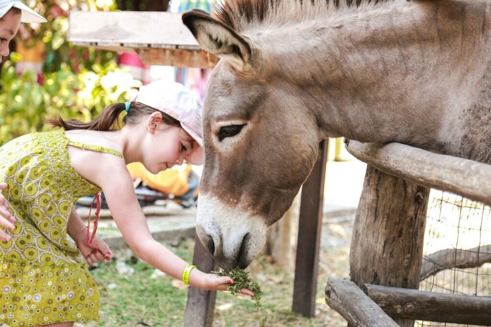 girl feeding a donkey