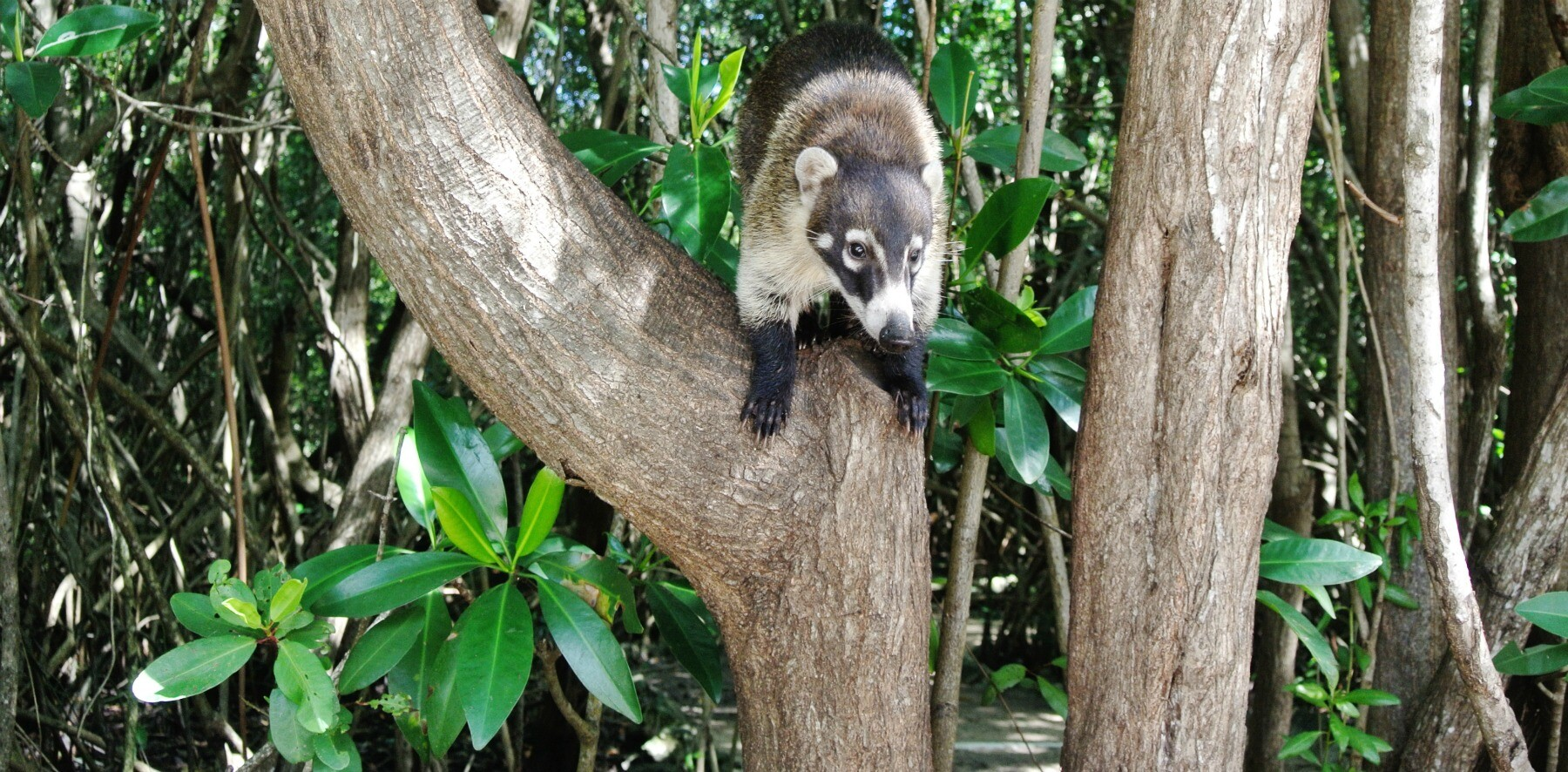 Hero Shot Coati Riviera Maya