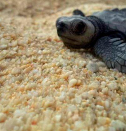 Las maravillas de la eclosión de las tortugas en Los Cabos