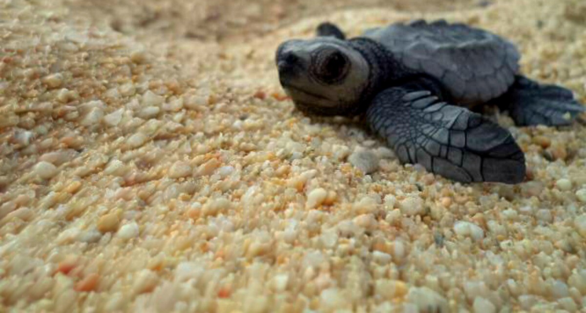 Baby turtle close up picture
