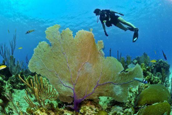buceo isla contoy