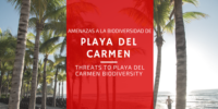 PLAYA DEL CARMEN (1)