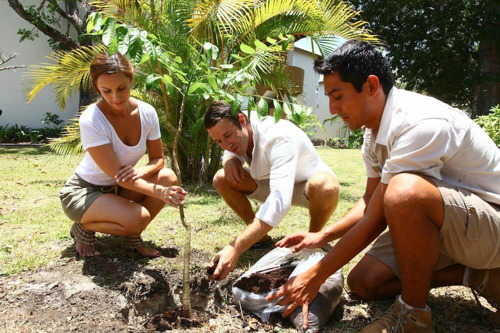 Planta un arbol Sandos Caracol