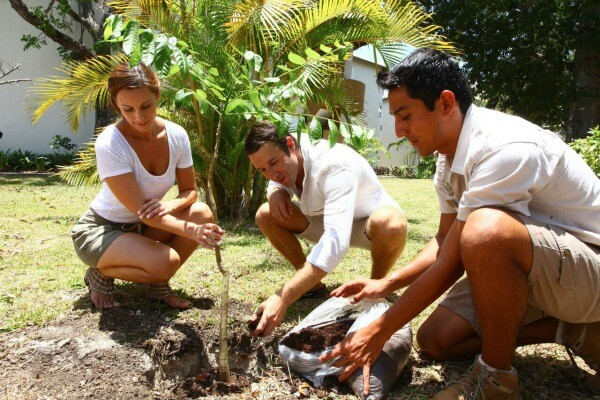 Plant a Tree Sandos Caracol