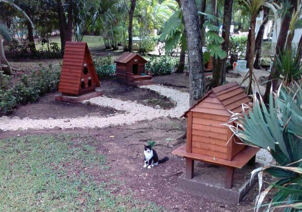 Playa del Carmen cats