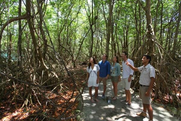 Riviera Maya Eco Tour