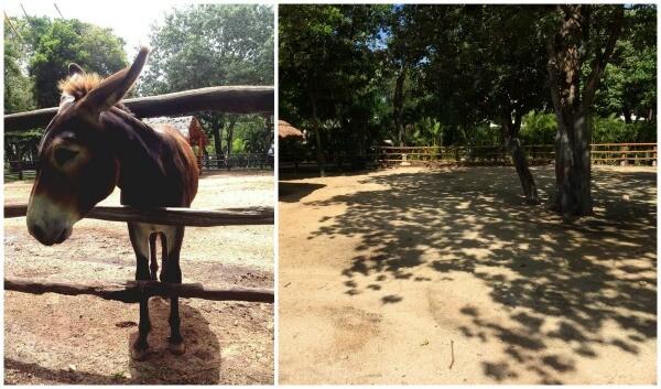 Riviera Maya establo para burros