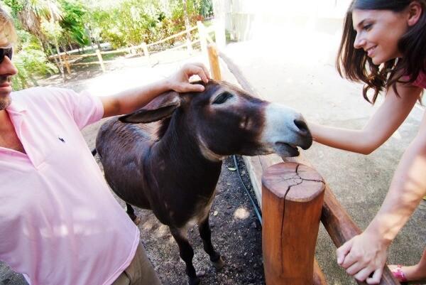 Riviera Maya donkey