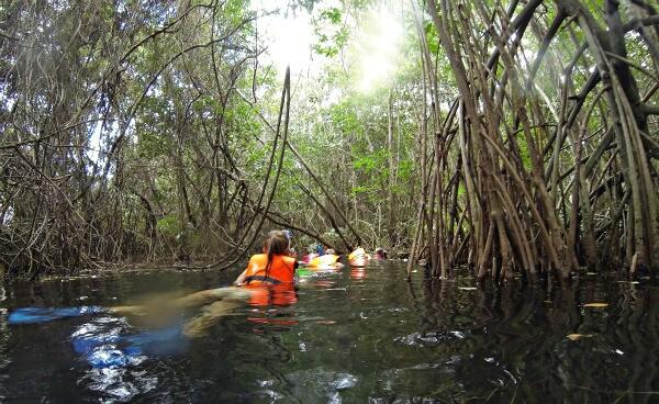 Riviera Maya mangrove tour