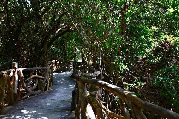 Sandos Caracol Eco Resort selva