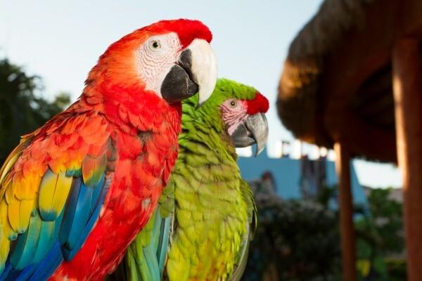 Sandos Caracol resort macaws
