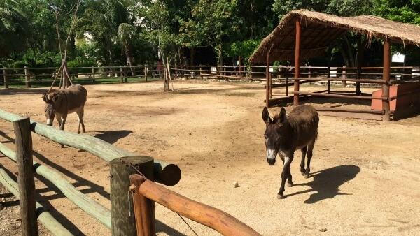 Sandos Playacar donkeys