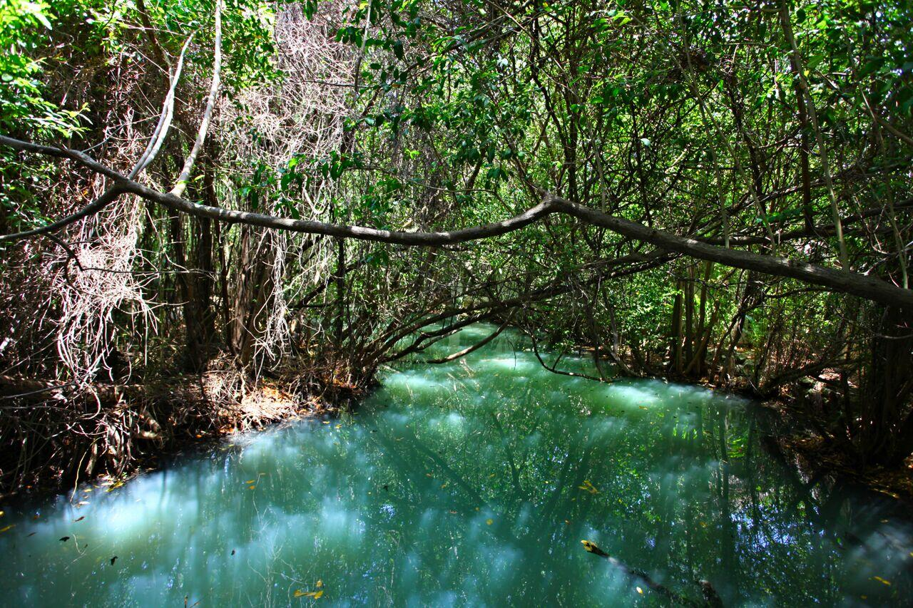 Los manglares estabilizan las líneas costeras y previene la erosión provocada por las olas y tormentas.
