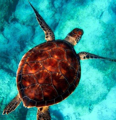 Nadando con Tortugas en Akumal