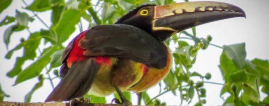 birding cancun