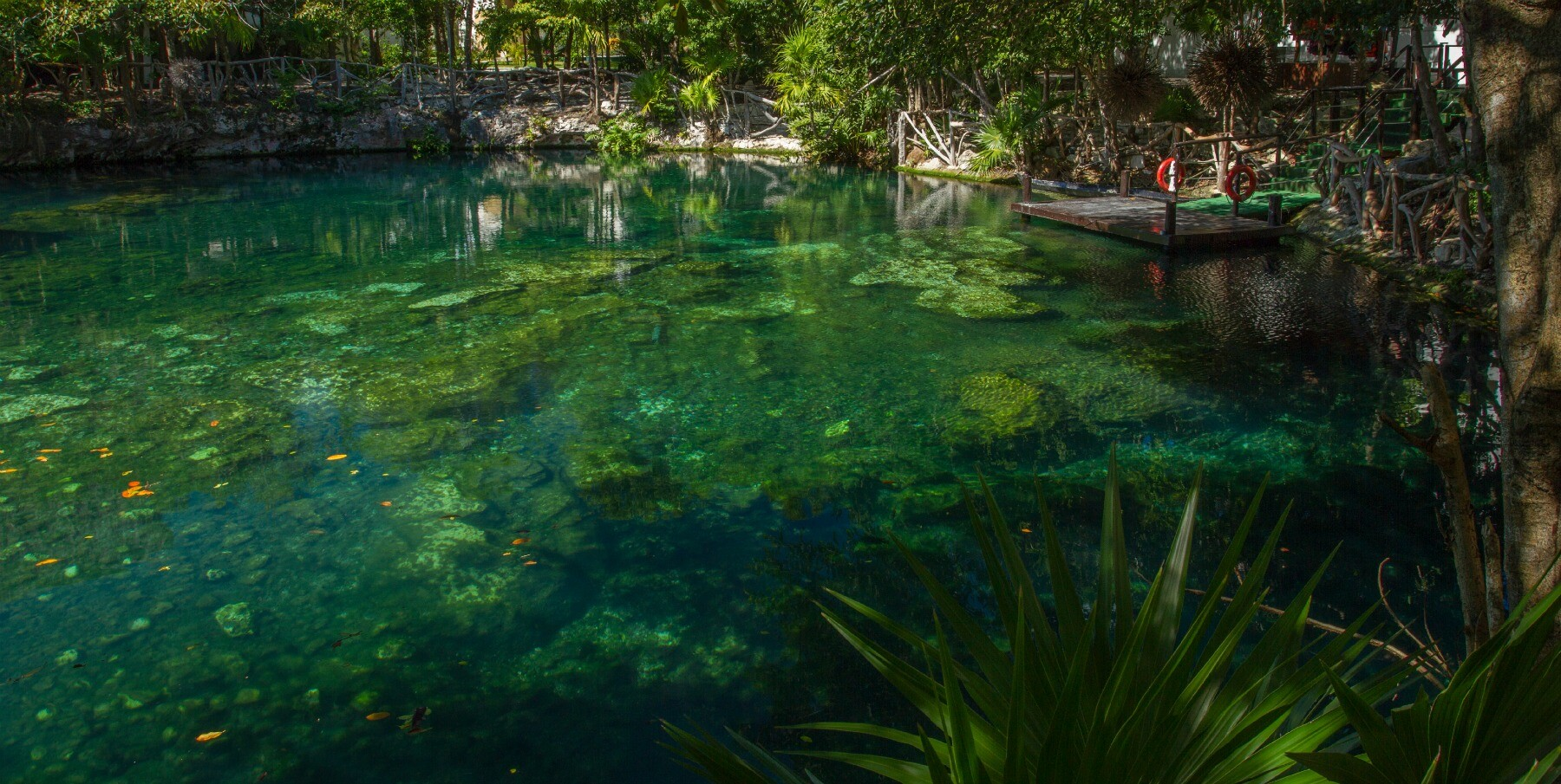 cenotes in the Riviera Maya