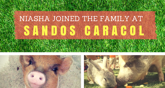 Niasha Joins the Family at Sandos Caracol