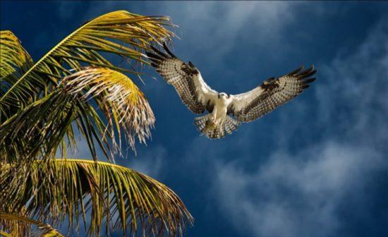 Osprey Yucatan